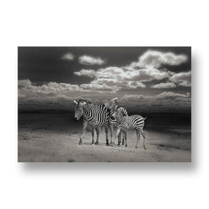 Zebras Under A Cloudy Sky Canvas Print in Colour