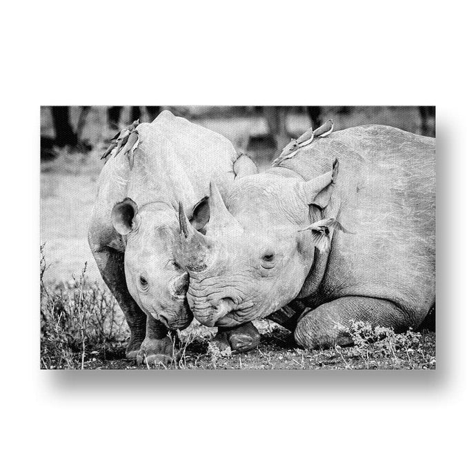 Mother and Calf Black Rhino Canvas Print
