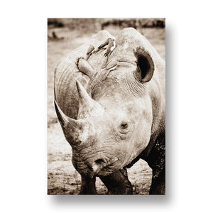 Male Black Rhino Canvas Print