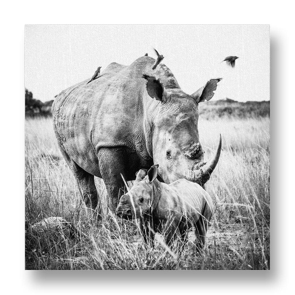 Mother and Calf White Rhino Canvas Print