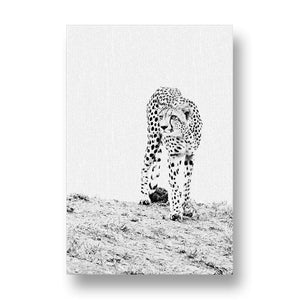 Male Cheetah Canvas Print
