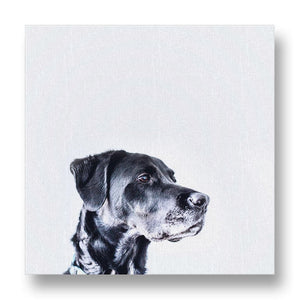 Dog Peering into the Future Canvas Print
