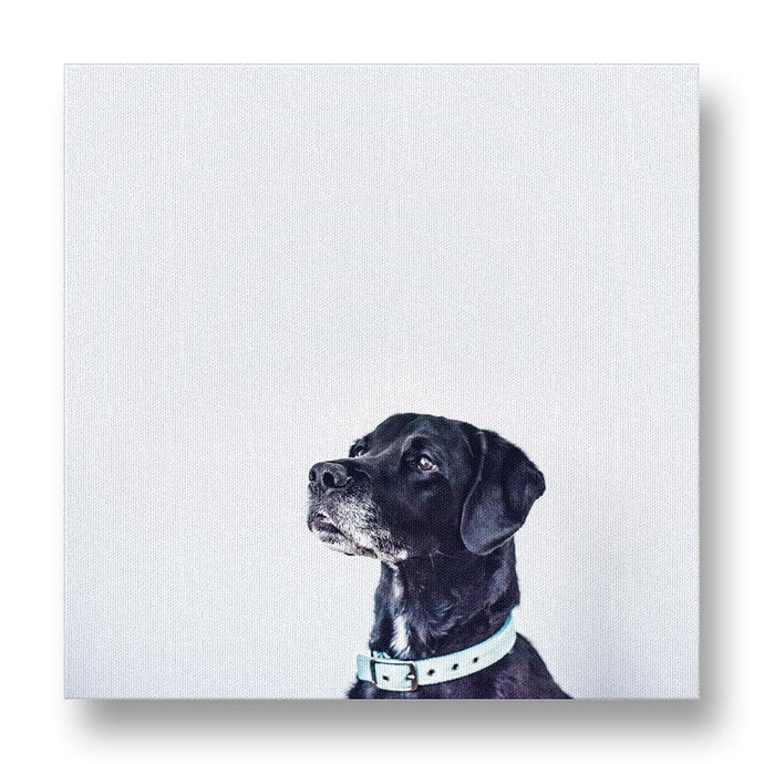 Dog Pondering Life Canvas Print