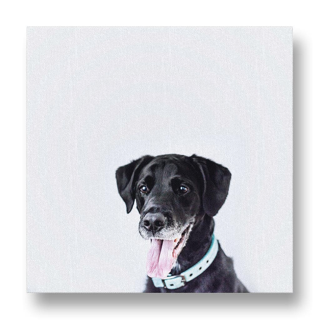 Dog with Tongue out Canvas Print