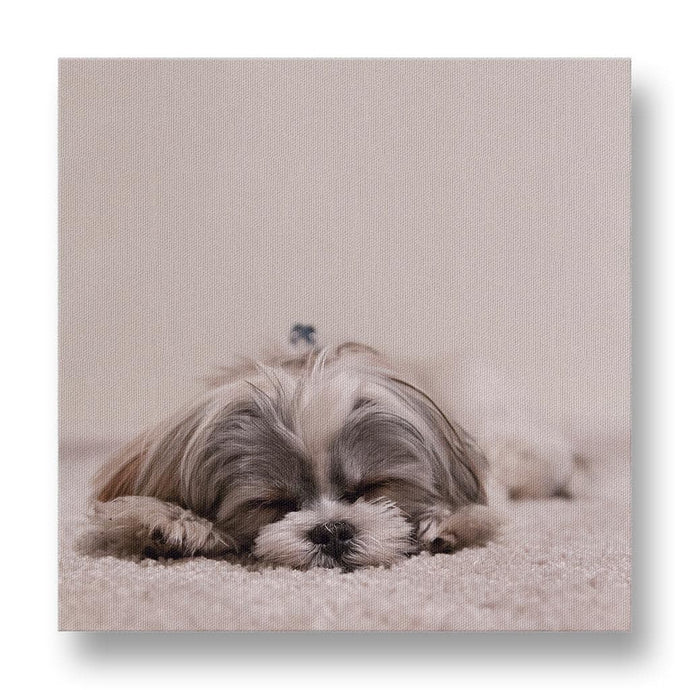 Sleeping Shih Tzu Canvas Print