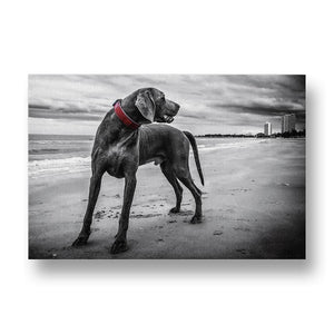 Welmaraner Dog with Red Collar on Beach Canvas Print