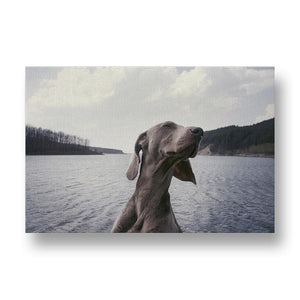 Welmaraner Dog Enjoying a Boat Ride Canvas Print