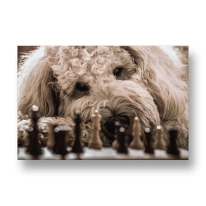 Golden Doodle Playing Chess Canvas Print