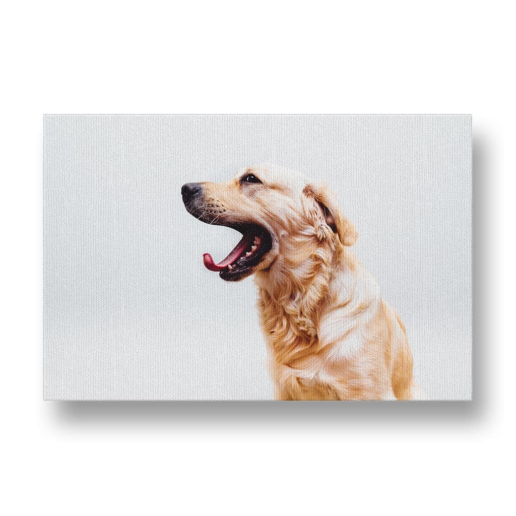 Golden Retriever Yawning Canvas Print