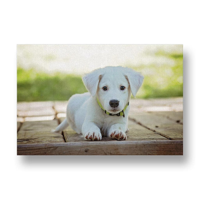 Cute Puppy with Green Collar Canvas Print