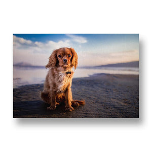 Adorable Cavalier King Charles Spaniel Dog on Beach Canvas Print