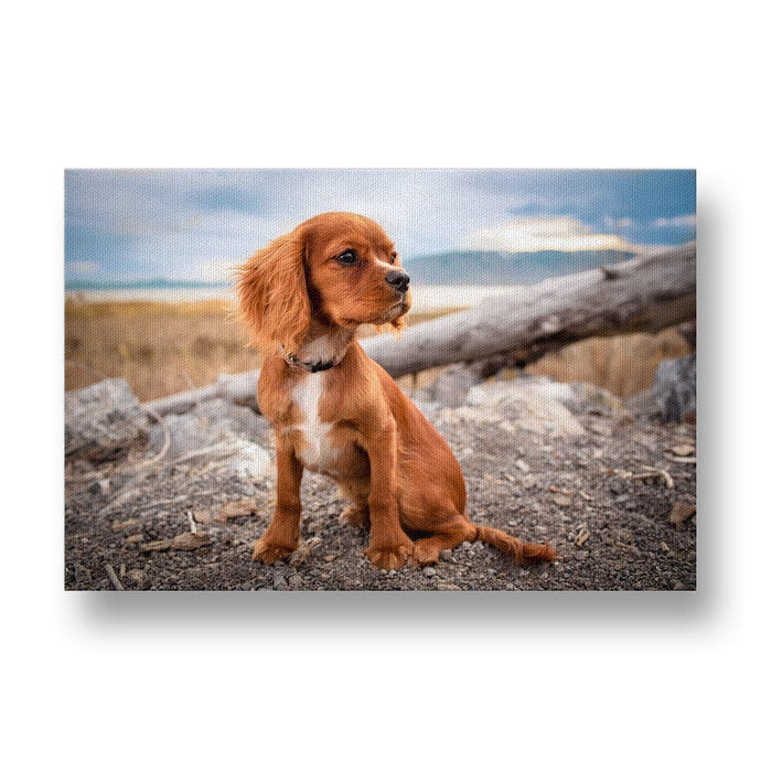 Adorable Cavalier King Charles Spaniel Dog on Rocks Canvas Print