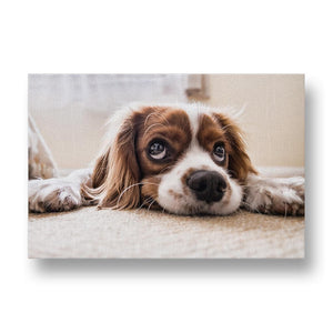 Big Puppy Eyes Canvas Print