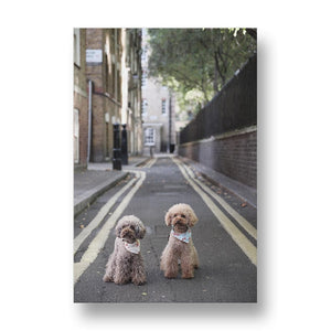 Poodle Gang Rules the Streets Canvas Print