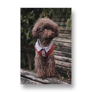 Poodle Gang Leader Canvas Print