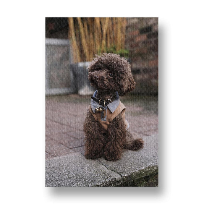 Poodle Nicely Dressed Canvas Print