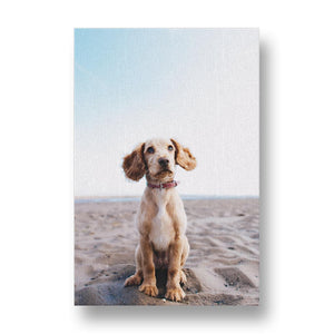Spaniel Dog on the Beach Canvas Print