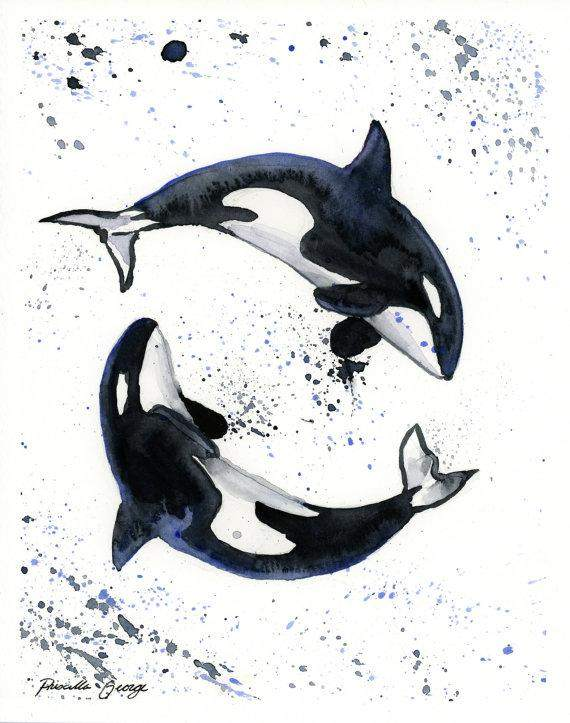 Orca Whales Watercolor Print  Whale Watercolor