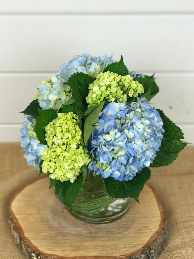 Blue, white and green hydrangea in a compact vase