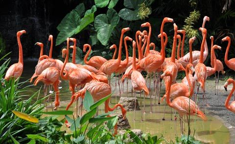 Flamingo natural habitats and shelters