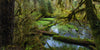 Hoh Rainforest Lake - Andre Distel Photography