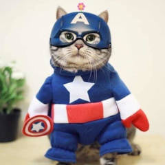 Did You Know That Your Cat Is A Superhero?