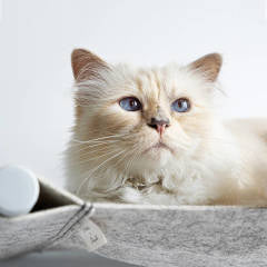Karl Lagerfeld's Cat Choupette launches her own Swing