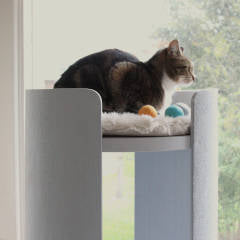Why Designer Cat Trees are the Ultimate Accessory | Luxury Cat Products