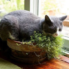 Perfect Indoor Plants You and Your Cat Will Love