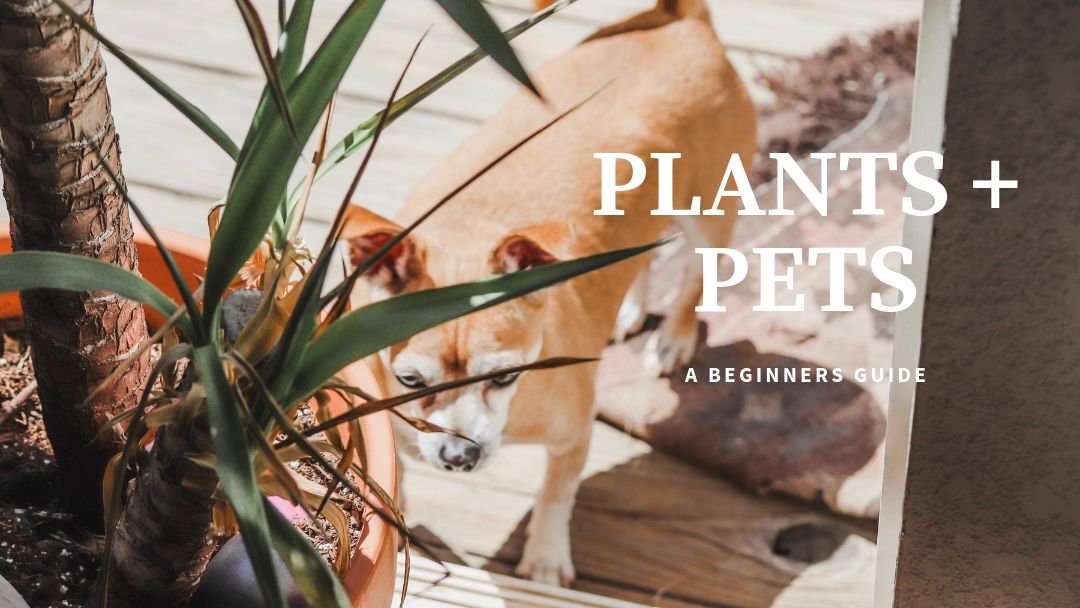 Plants + Pets  ...A Beginners Guide