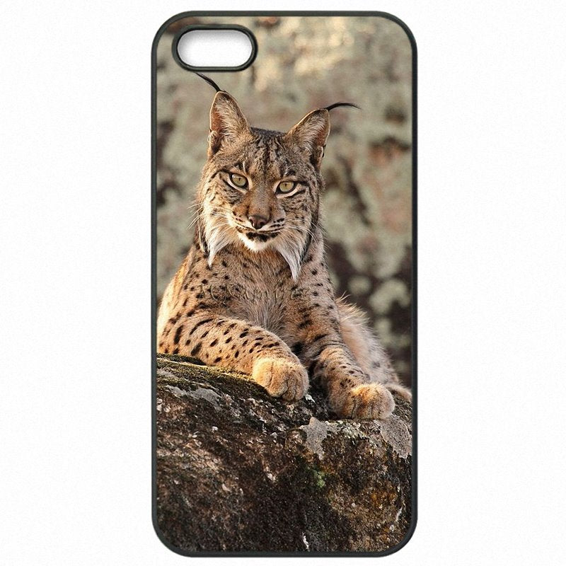 Cell Phone Cover Shell For Huawei P8 Lite 2015 Iberian Lynx A Most Endangered Small Big Cat Amazon