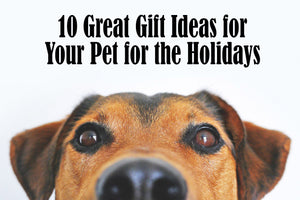 10 Gift Ideas for Your Pet for the Holidays