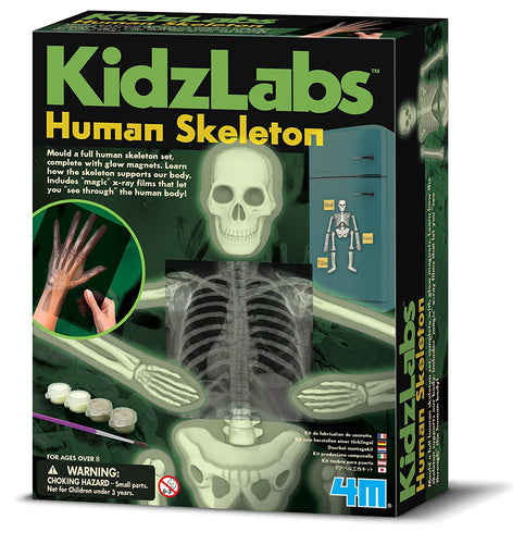 4M Glow Human Skeleton Science Kit - All-Star Learning Inc. - Proudly Canadian