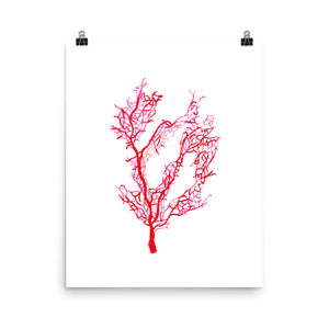 Red Coral • Art Print