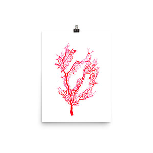 Red Coral Art Print