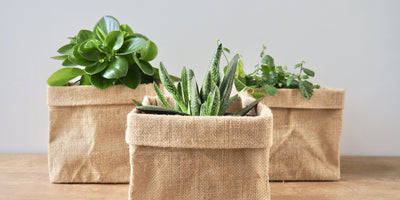 Plants in Hessian Bag