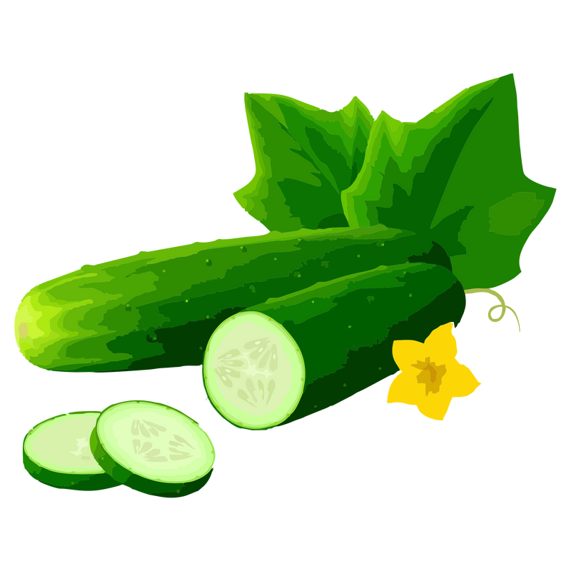 CUCUMBER VEGETABLE OIL