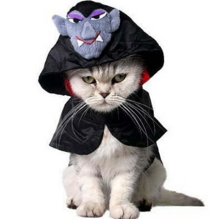 Dracula Cape Costume - Always Whiskered