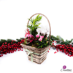 Christmas Living Planter Basket, Living Planters,- Creations Flowers