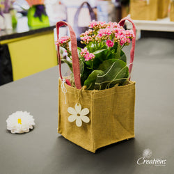 Flowering Plant Gift Bag, Living Planters,- Creations Flowers