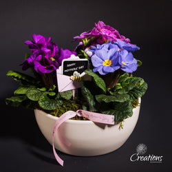 Primula Planter in Cream Container, Living Planters,- Creations Flowers