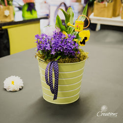 Flowering Bucket Planter, Living Planters,- Creations Flowers