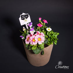 Spring Plants in Stone Container, Living Planters,- Creations Flowers