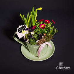 Tea Cup & Saucer Planter, Living Planters,- Creations Flowers