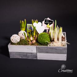 Trug of Spring Bulbs in Ornamental Planter, Living Planters,- Creations Flowers