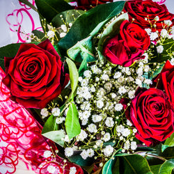 Luxury Naomi Red Roses in Presentation Gift Bag, Valentine's Day Roses,- Creations Flowers