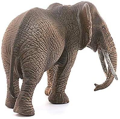 African Elephant Female (14761)