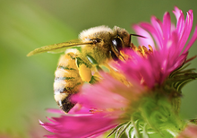 Sponsor A Flowering Plant - Save The Bees