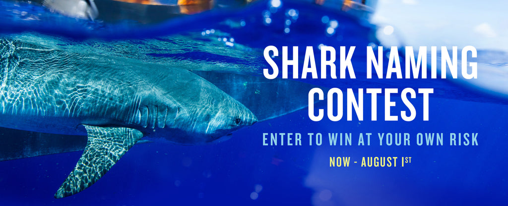 Name the Shark Contest Official Rules Page
