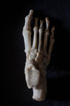 Antique human teaching bone - Foot-Anatomy Boutique-Anatomy Boutique